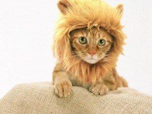 yo yo y yo gatito disfrazado de leon