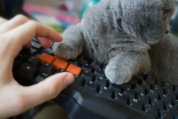 trabajando con mi gatita sobre el teclado